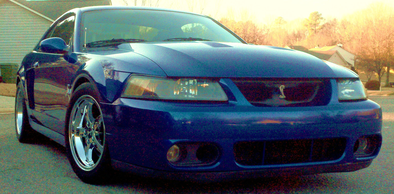 2003 Ford SVT Mustang Cobra For Sale  Chapin South Carolina