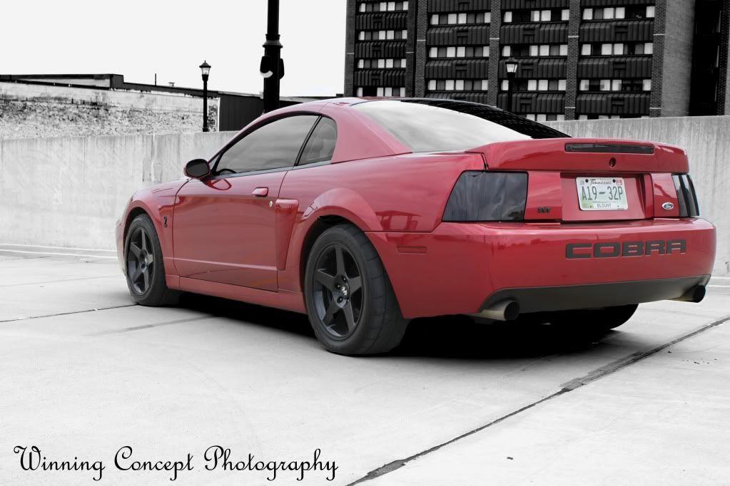 2004 ford mustang cobra mustang cobra svt for sale tampa florida. Black Bedroom Furniture Sets. Home Design Ideas